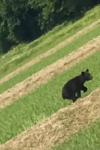 注意!!!熊の出没情報